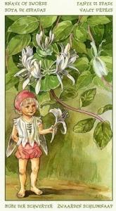 63-spirit-flowers-tarot-swords-13