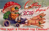 Что ждет в Новый год Свиньи гадания и предсказания на 2019