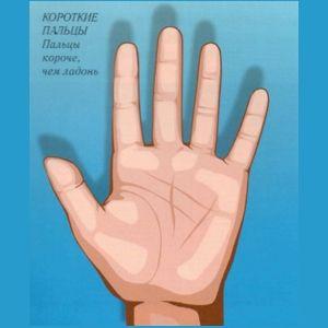 Хиромантия по руке по форме пальцев, рука, ладонь