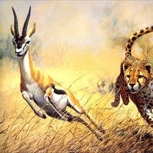 Сонник онлайн антилопа, во сне видеть антилопа, к чему снится антилопа