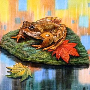 Сонник онлайн на букву Ж к чему снится жаба